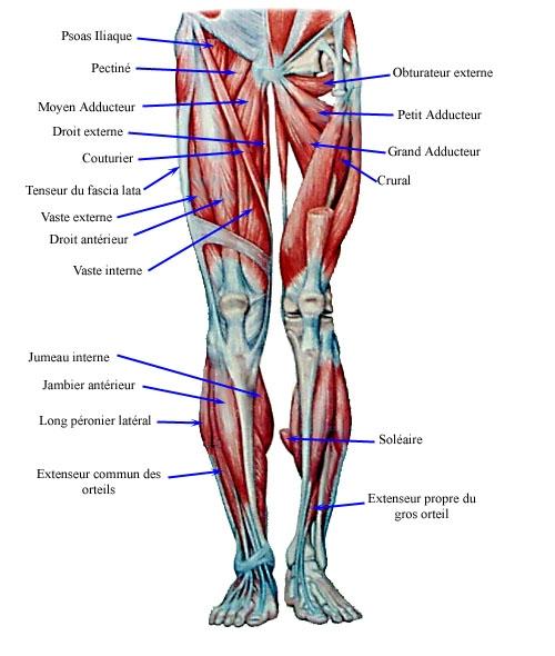 appareil pour muscler les jambes